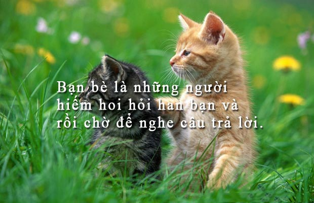 quotes vua hay vua chat ve tinh ban be 32