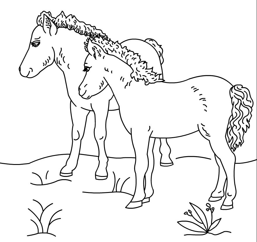 Những chú ngựa trên bãi cỏ