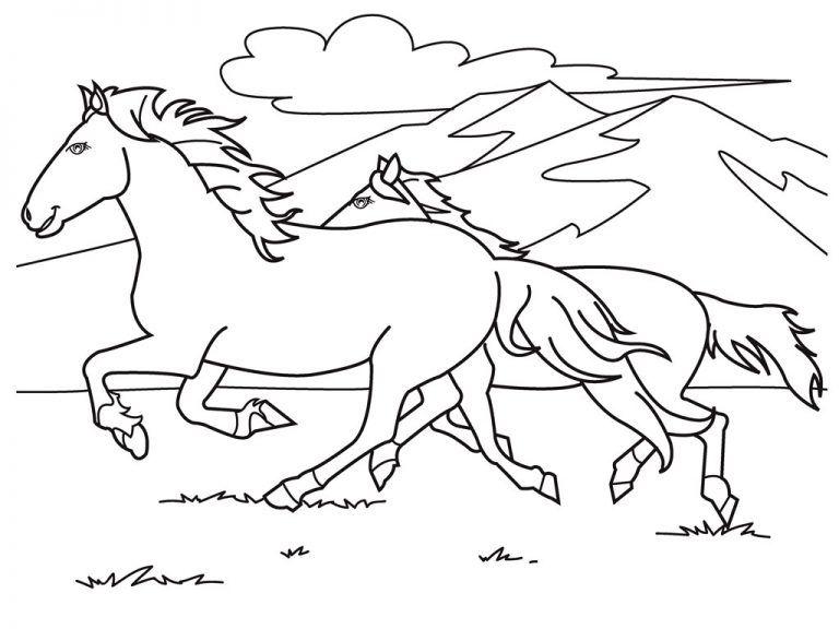 Những chú ngựa trên đồi cỏ
