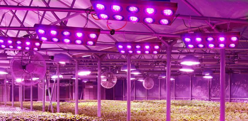 hệ thống thông gió cùng đèn LED quang hợp.