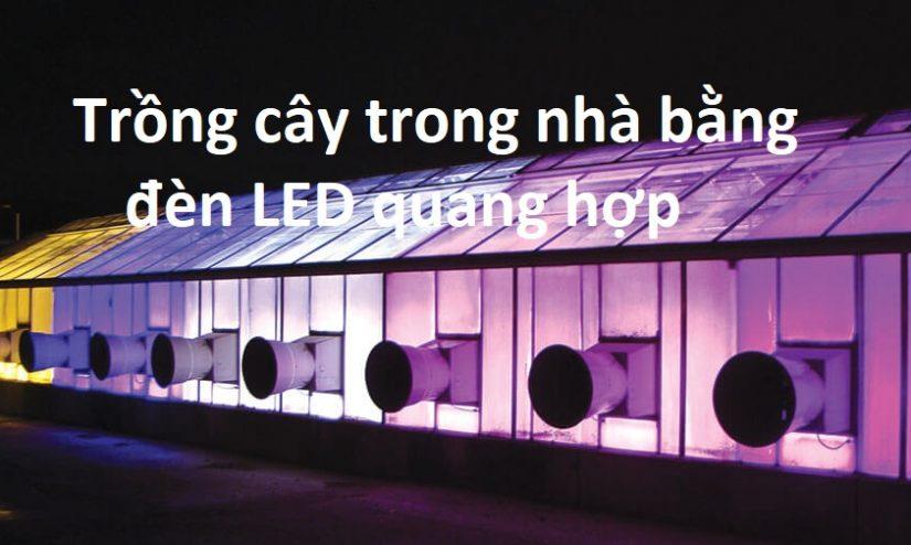 Trông cây trong nhà kính bằng đèn LED quang hợp